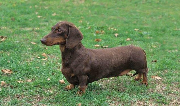 dog rancor